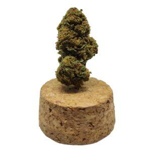 infiorescenza cannabis indica bubble gum