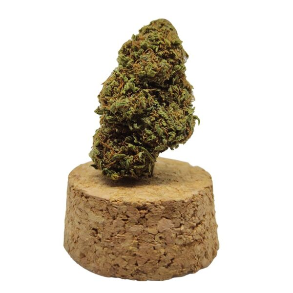 infiorescenza cannabis indica