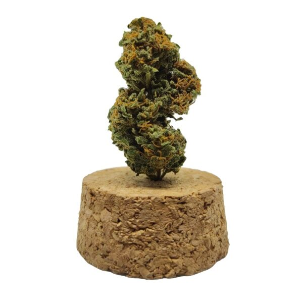 infiorescenza cannabis light Cherry Punch