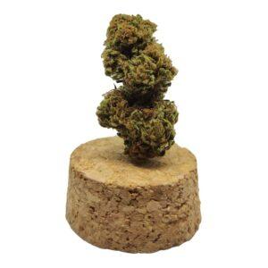 infiorescenza cannabis light sativa